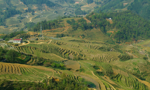 Rice fields in the mountains of Sapa, Vietnam